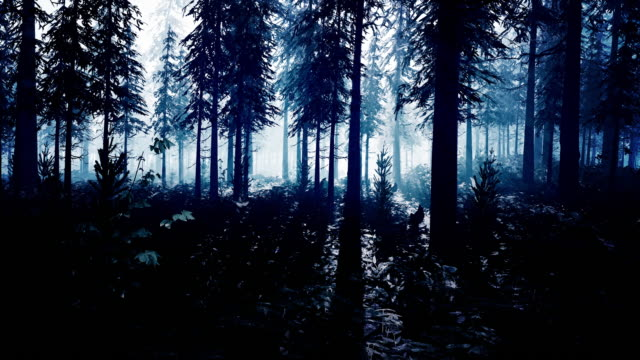 a mysterious dark forest lit by an alien white light - alien stock videos & royalty-free footage