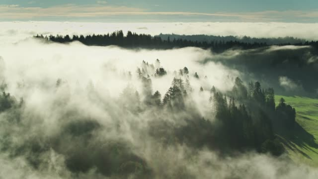 Mysterious Fog Over California Redwood Forest - Aerial