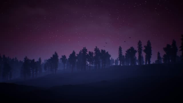 Mysterious night sky above the coniferous forest