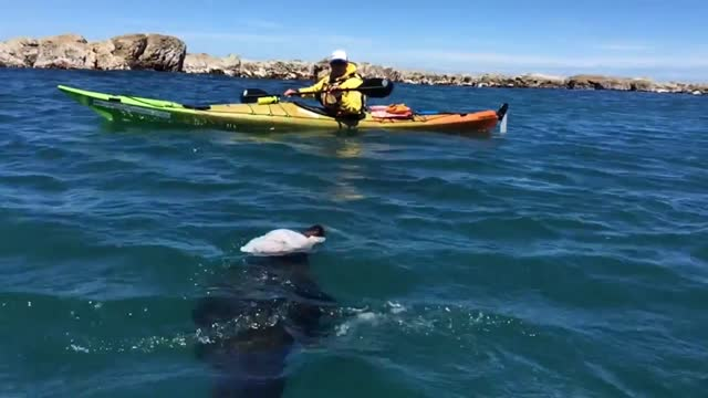 vídeos de stock, filmes e b-roll de mysterious rising bubbles have been spotted in the waters off whalers bay in kaikoura, a week after the deadly 7.8 magnitude earthquake struck the... - kaikoura