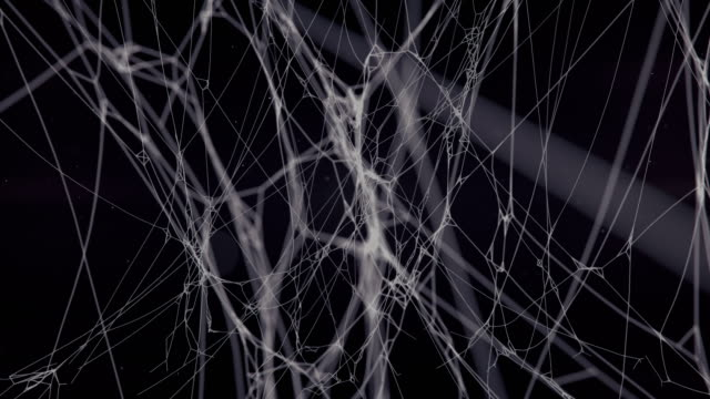 mysterious spider net abstract composition surrounded by flying particles on dark background. 3d rendering digital animation. mystic volume light. 4k, ultra hd resolution - spider web stock videos & royalty-free footage
