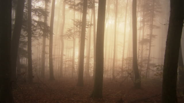 mystic fog in fall forest