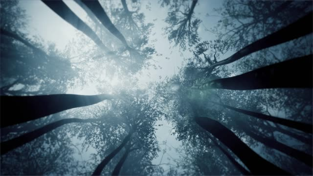 mystical forest. treetops view from the bottom. - tree stock videos & royalty-free footage