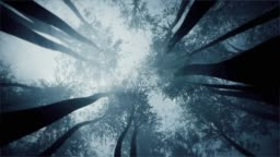 Mystical forest. Treetops view from the bottom.