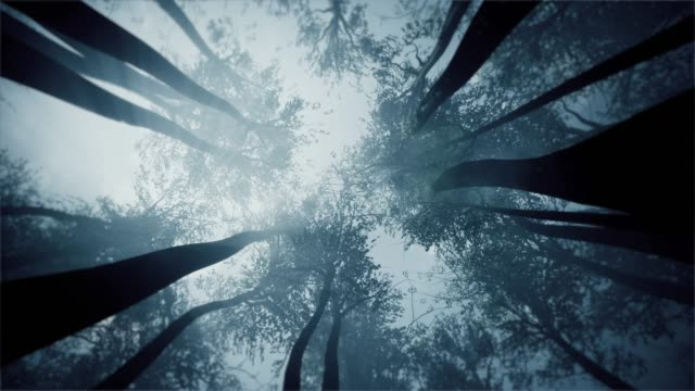 mystical forest. treetops view from the bottom. - low angle view stock videos & royalty-free footage