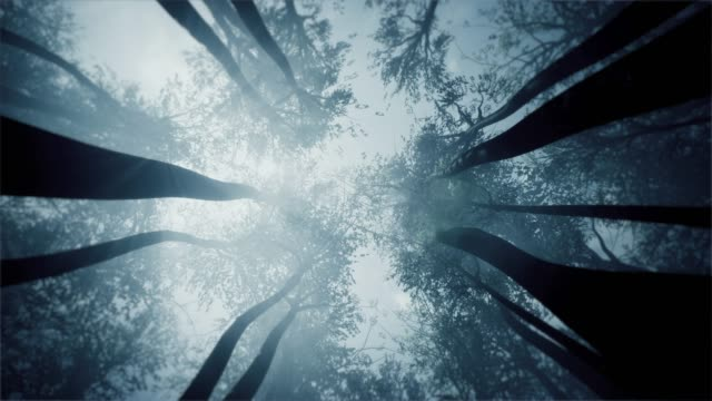 mystical forest. treetops view from the bottom. - fog stock videos & royalty-free footage
