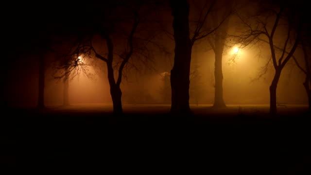 vídeos de stock, filmes e b-roll de noite enevoada mística na floresta - estupefação