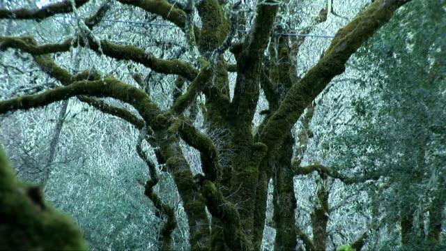 mythic woods - mythology stock videos & royalty-free footage