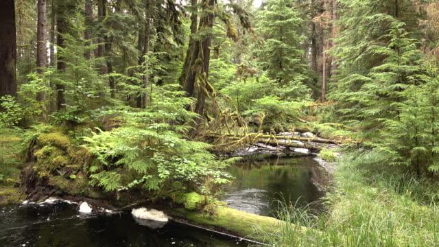 Naikoon Provincial Park tannic creek Haida Gwaii British Columbia Canada