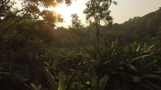 vídeos de stock e filmes b-roll de nam et–phou louey national protected area is located in the northeast of lao pdr with an area of 4229 km2 it is the largest of laos' national parks... - floresta pluvial