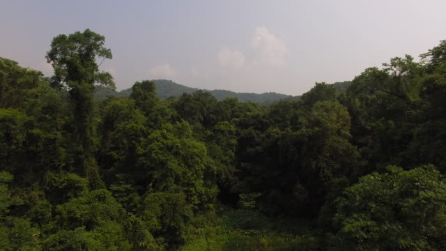 Nam Et–Phou Louey National Protected Area is located in the northeast of Lao PDR With an area of 4229 km2 it is the largest of Laos' national parks...