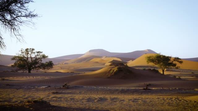 vídeos de stock, filmes e b-roll de deserto do namibe ao nascer do sol - safári