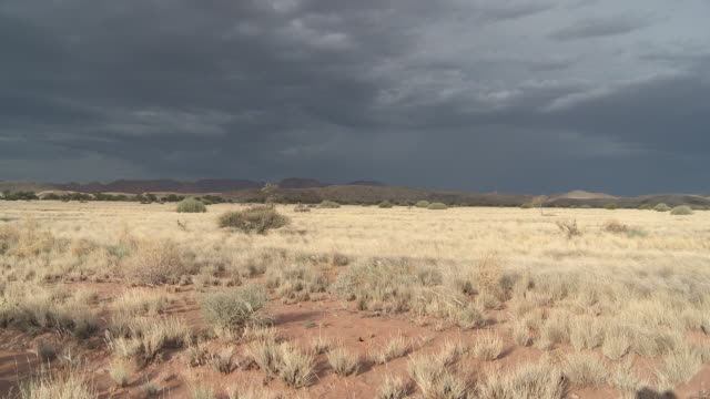 stockvideo's en b-roll-footage met namibia, damaraland wilderness area, vegetation in the desert - wildernis