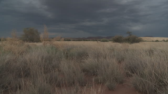 Namibia, Damaraland Wilderness Area, vegetation in the desert