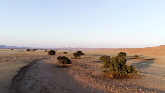 Namibian desert during sunset. Aerial view of road and single trees
