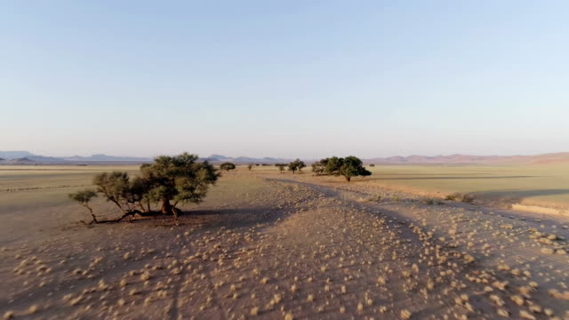 namibian desert during sunset. aerial view of road and single trees - dry stock videos and b-roll footage