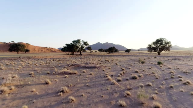 namibian desert during sunset. aerial view of road and single trees - arid climate stock videos & royalty-free footage