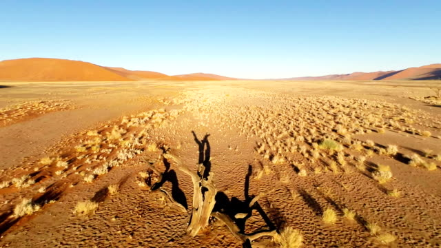 heli namibian desert - grass area stock videos and b-roll footage