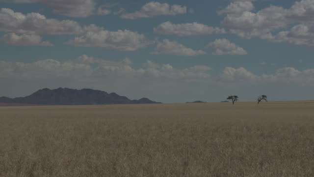 namibian plain - 荒野点の映像素材/bロール