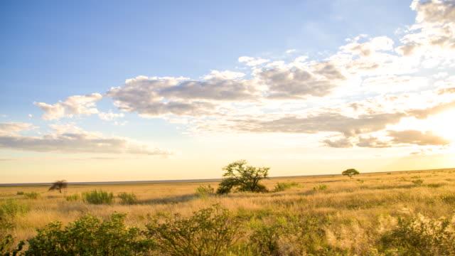 POV Namibian Savannah At Sunset
