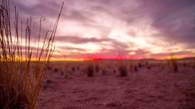 stockvideo's en b-roll-footage met la ds namibian savannah at sunset - namibië