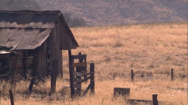 Napa Valley, CAHorse in field near barn