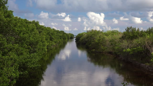 vidéos et rushes de narrow canal lined with mangrove trees in everglades national park, florida - canal eau vive