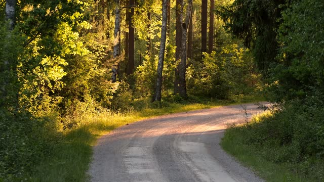 a narrow gravel road in forest in evening sun in summer - 六月点の映像素材/bロール