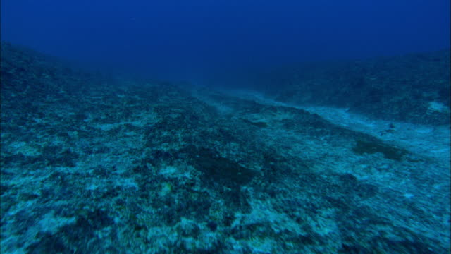 stockvideo's en b-roll-footage met narrow sand channel, underwater. aldabra, indian ocean  - oceaanbodem