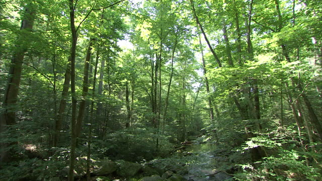 a narrow stream flows through an appalachian forest. - appalachia stock videos & royalty-free footage