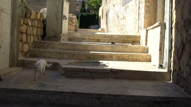 narrow street in the old town of mardin in southeast anatolia region, turkey - narrow stock videos & royalty-free footage
