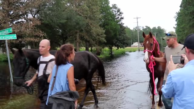 stockvideo's en b-roll-footage met national guard soldiers and civilian search and rescue teams continue to provide support to residents as floodwaters continue to rise in south... - reddingswerker
