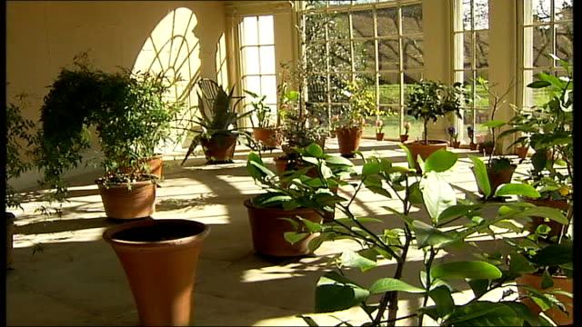 national trust property osterley park; int plants in conservatory close up of plant and fruit ext andy eddy interview sot - national trust video stock e b–roll