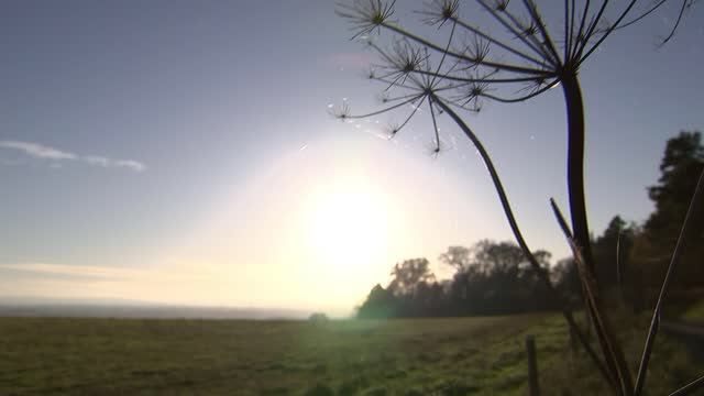 national trust to stop issuing licences for trail hunting on its land; england: oxfordshire: badbury clump: ext national trust 'badbury clump' sign... - national trust video stock e b–roll