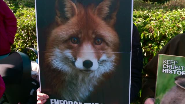 national trust votes against fox hunting ban on its land; wiltshire: swindon: ext fox hunt along on country road anti-hunt protesters - national trust video stock e b–roll