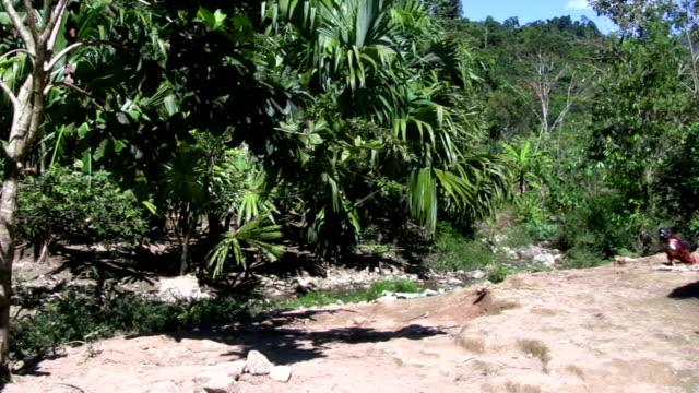 vídeos de stock e filmes b-roll de hd: índio americano de - colômbia