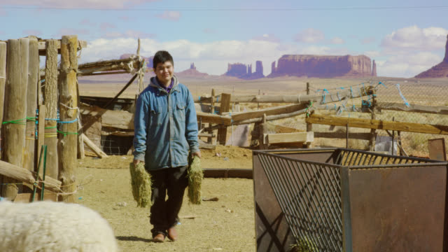 a native american teenaged boy places some hay into a metal hay feeder for his sheep in a fenced in pasture in monument valley, utah/arizona with a large rock formation in the background - ranch stock videos & royalty-free footage