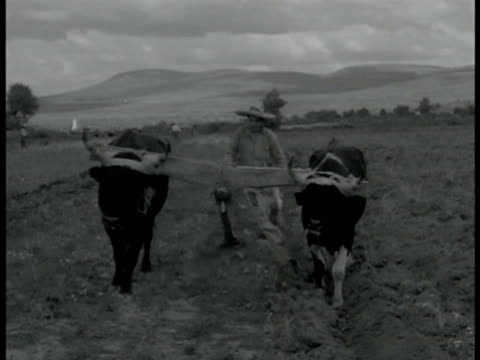 native farmer in sombrero w/ cattle plowing soil farmer w/ cattle plowing cu wooden mouldboard plough plowing through soil - sombrero stock videos & royalty-free footage