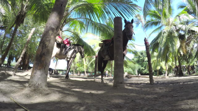 vidéos et rushes de native horses in the amazon jungle - colombia south america - colombie