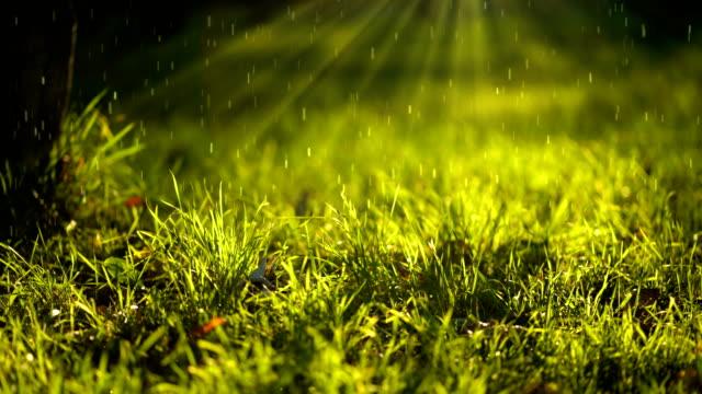 vídeos y material grabado en eventos de stock de fondo natural con partículas 3d. hojas de césped en la luz del sol. resolución 4k. - rayo de sol