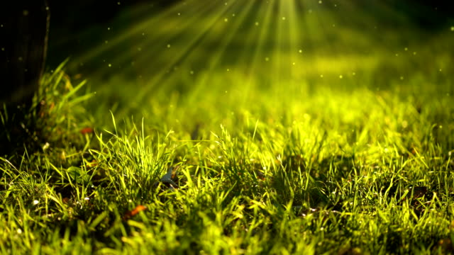 Natural background with 3D Particles. Grass blades in sun light. 4k resolution.