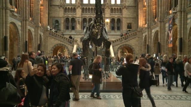 Natural History Museum dinosaur 'Dippy' to tour country Dippy the dinosaur replica skeleton on display/