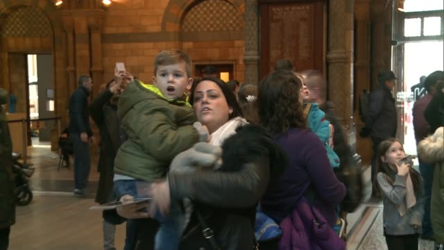 Natural History Museum dinosaur 'Dippy' to tour country Visitors looking at Dippy the dinosaur skeleton on display