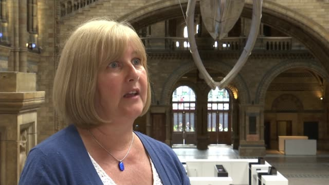 Natural History Museum dinosaur replaced by blue whale Natural History Museum Lorraine Cornish interview SOT