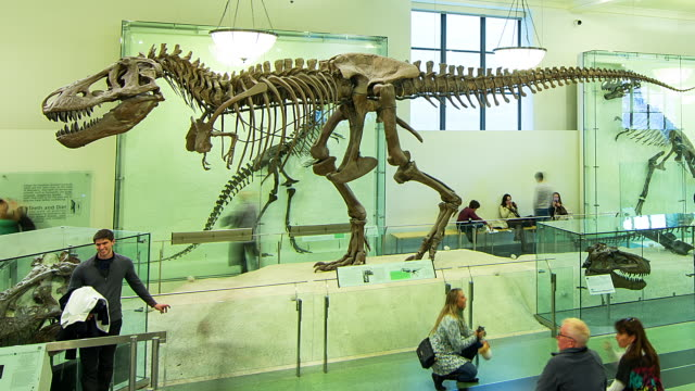 t/l nyc natural history museum dinosaurs - museum stock videos & royalty-free footage