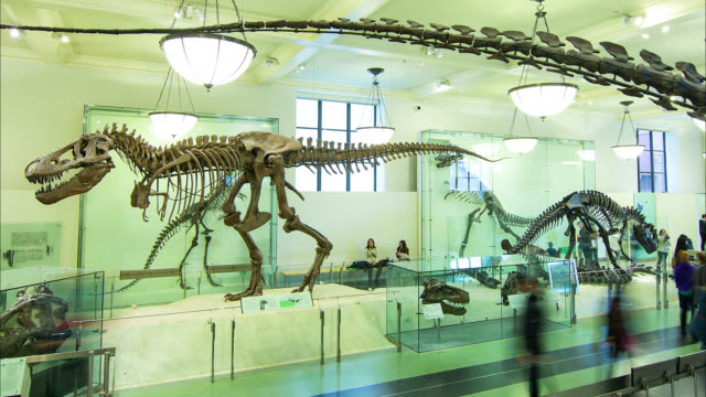 t/l nyc natural history museum dinosaurs - museum stock-videos und b-roll-filmmaterial