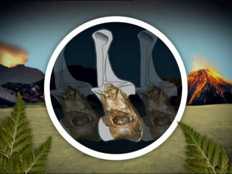 Natural History Museum fossil identified as new type of dinosaur GRAPHIC Xenoposeidon dinosaur bones