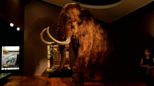 natural history museum interior with mammoth, visitors, exhibitions, nature/ basel, switzerland - extinct stock videos & royalty-free footage