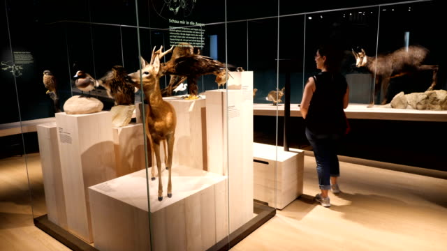 Natural history museum interior with visitors, exhibitions, nature/ Basel, Switzerland