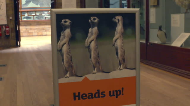 natural history museum prepares to reopen after coronavirus lockdown with hand sanitizer, and social distancing and face mask signs - social history stock videos & royalty-free footage